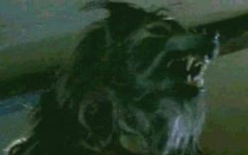 Guida a Cursed (4. Moderni lupi mannari)
