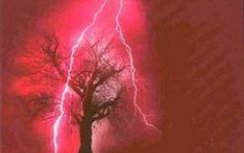 L'horror 2008 targato Gargoyle