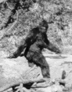 Sasquatch, cugino americano dello Yeti, in una famosa fotografia
