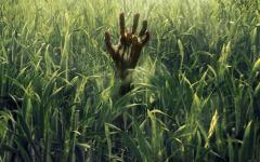 Nell'erba alta: annunciata la data di uscita del film Netflix