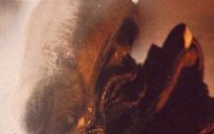 Premio Alien 2005: finalisti e segnalati