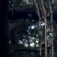 """Popcorn Frights 2018: """"Don't Leave Home"""" nel programma del Festival"""